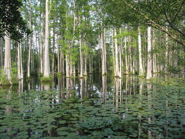 Fotos Cypress Gardens South Carolina